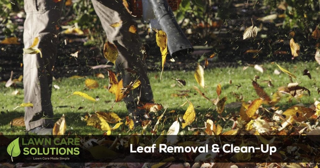 leaf removal of lawn